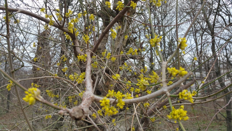 augarten winter gamanacasa (4)