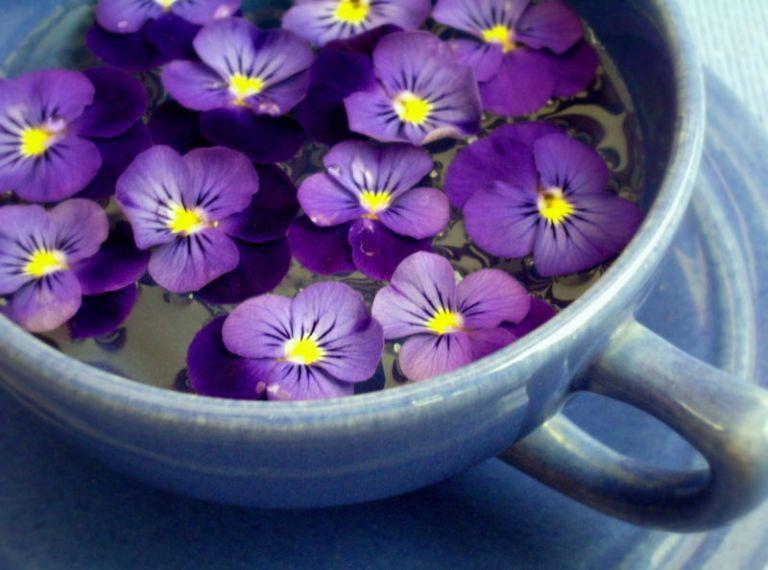gamanacasa violets