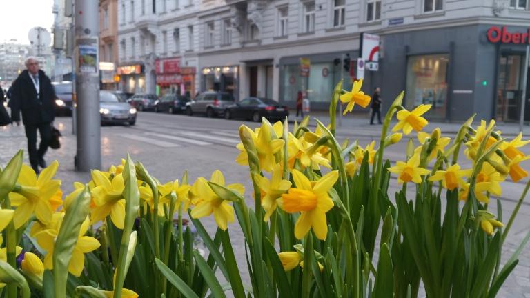 gamanacasa vienna spring flowers 3