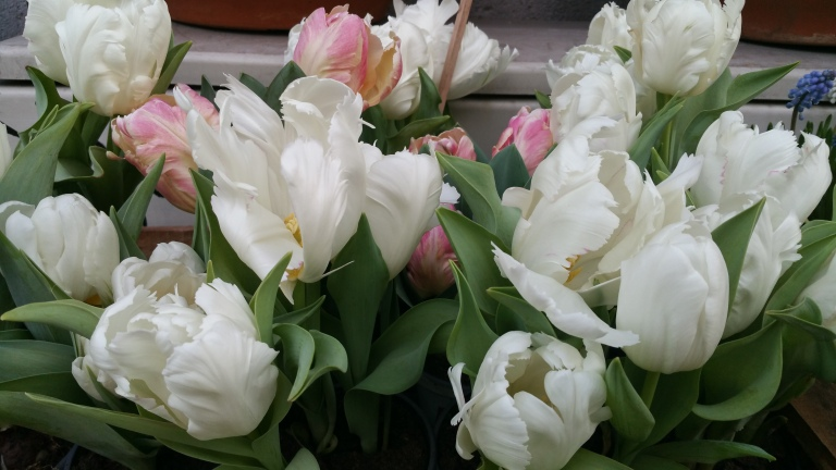 gamanacasa vienna spring flowers 4