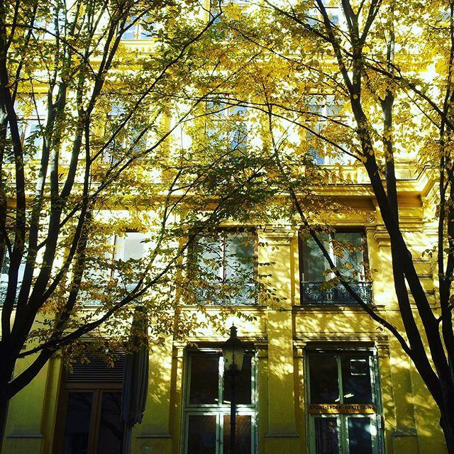 gamanacasa yellow 4 vienna house