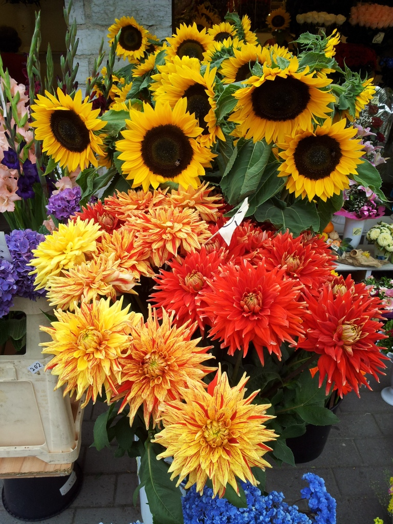 gamanacasa vienna yellow flowers spring 6
